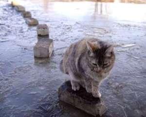 кот на кирпичах